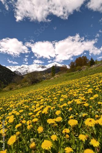 Montagne Fiori Estate Cime Paesaggio Sfondo Fiorire Fiori Nuvole