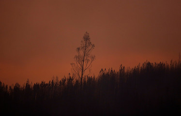 Smoke from a forest fire turns the sky orange in the village of Carvalho