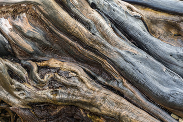 Driftwood caught on the reef