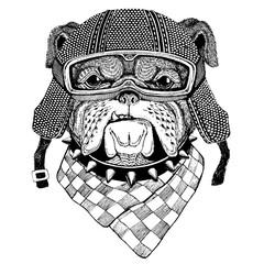Bulldog wearing vintage motorcycle helmet Tattoo, badge, emblem, logo, patch, t-shirt