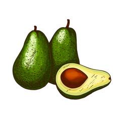 Avocado tropical exotic fruit vector sketch icon
