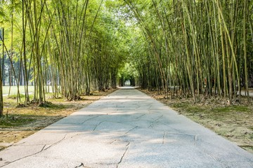 Travel and  Bamboo Forest