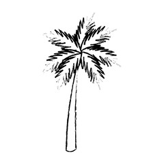 palm tropical tree beach plant image