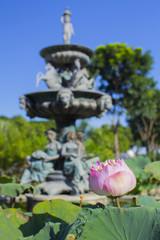 ハス 熱帯植物 観葉植物 花