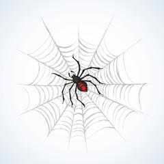 Spider. Vector illustration