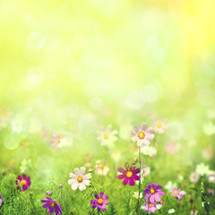 Beauty spring and summer landscape with fresh daisy flowers