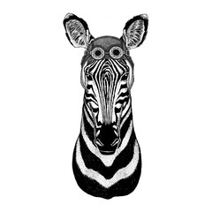 Zebra Horsewearing aviator hat Motorcycle hat with glasses for biker Illustration for motorcycle or aviator t-shirt with wild animal