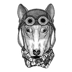 DOG for t-shirt design wearing aviator hat Motorcycle hat with glasses for biker Illustration for motorcycle or aviator t-shirt with wild animal