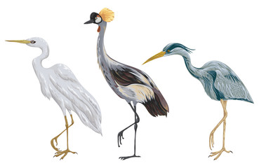 Heron birds set. Marsh fauna. Isolated elements. Vintage hand drawn vector illustration in watercolor style