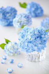 Wall Mural - Beautiful blue hydrangeaあじさい