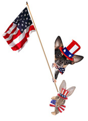 Cute chihuahua dog and cute bunny celebrating independence day 4th of july with america flag