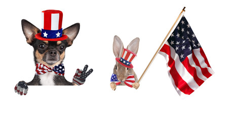 Cute chihuahua dog and cute bunny  celebrating independence day 4th of july with peace fingers and with america flag