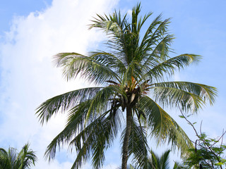 View of a palm tree over a blue sky and some copy space on the left