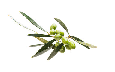 Branch with green olives isolated