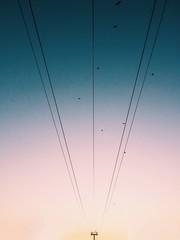 Birds Flying Over Power Line