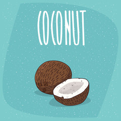 Group of several ripe coconut fruits, whole and beautifully chopped to pieces. Visible flesh. Isolated blue background. Realistic hand draw style. Lettering Coconut