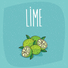 Group of several ripe lime fruits with leaves, whole and beautifully cut into pieces. Visible flesh. Isolated blue background. Realistic hand draw style. Lettering Lime