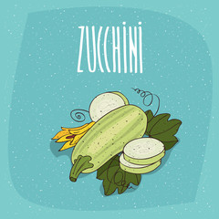 Ripe vegetable fruits courgette, whole and beautifully cut into pieces. Visible flesh and seeds. Isolated blue background. Realistic hand draw style. Lettering Zucchini