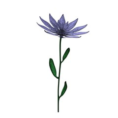 Isolated purple flower with stem and leaves