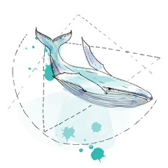 Hand drawn watercolor vector whale