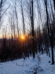 Sunset in the forest in Carpathians, Slovakia