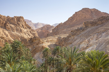 Stone desert with palm oasis in canyon in Tunisia