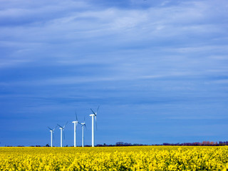 Windkraftanlagen im Rapsfeld bei Altefähr