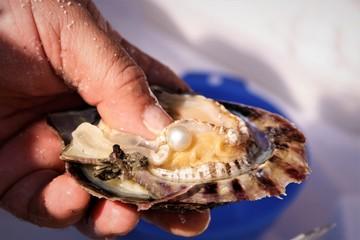 Muschel mit Perle.