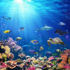 Fototapeten Riff Underwater Scene With Coral Reef And Tropical Fish
