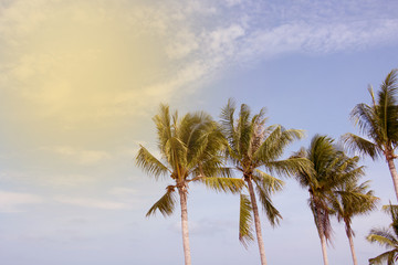 view of coconut and blue sky