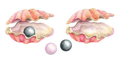 Sea shells. Watercolor illustration