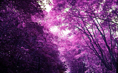 Magic purple forest, covert in mystical lilac colour