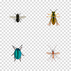 Realistic Gnat, Midge, Bee And Other Vector Elements. Set Of Insect Realistic Symbols Also Includes Gnat, Midge, Bee Objects.