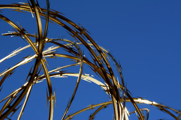 Razor Wire with a Golden Hue from the Setting Sun