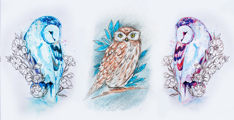 Set of sketches of multicolored owls on a white background.