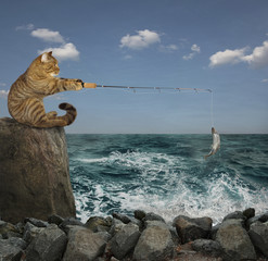 The cat is sitting on the cliff and catching fish.
