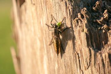 Orribile mosca
