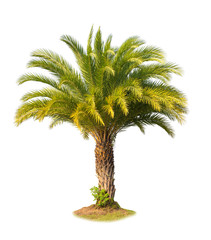 Green beautiful palm tree isolated on white background