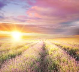 Zmierzchu niebo nad fiołkowym lawendy polem w Provence, Francja. Lawendowy krzaka zbliżenie na wieczór świetle.