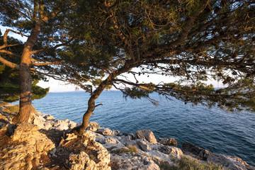 Park suma sveti Petar in Makarska Rivera in Croatia