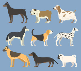 Dog pet character bread in flat style puppy pet animal doggy vector illustration.