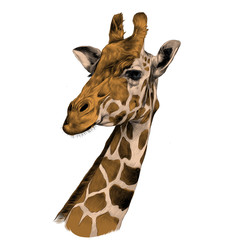 the head of a giraffe sketch vector graphics color picture brown