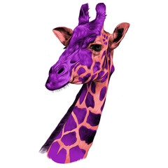 the head of a giraffe sketch vector graphics color pattern pink and raspberry