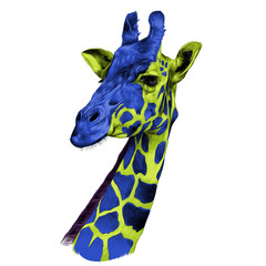 the head of a giraffe sketch vector graphics color drawing of green and blue