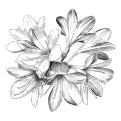 Lily bouquet 7 flowers sketch vector graphics black and white drawing