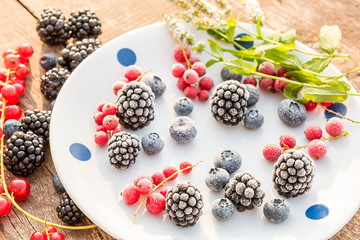 Various berries of blackberries, currants, blueberries are covered with frost on a plate and sprigs of mint. Soft sun natural light.