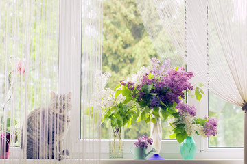 Vases with lilac bouquets at a window and a cat behind a curtain.