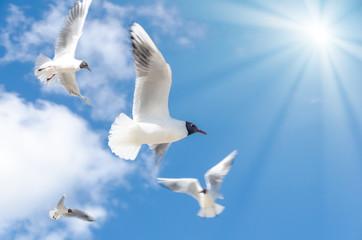 Möwen fliegend mit Sonne