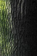 Fototapeta Tree 2 obraz