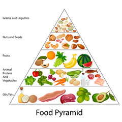 Education Chart of Food Pyramid Diagram